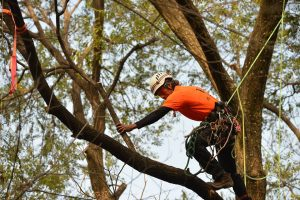 Podar un árbol se paga con cárcel