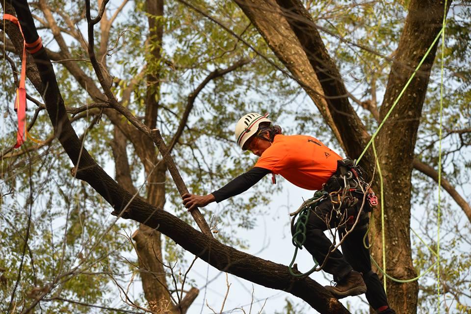 Curso básico de trepa, poda y derribo de árboles y palmeras en Barra de Navidad, Jalisco