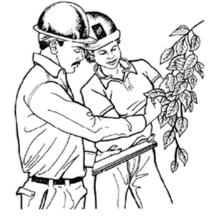 Selección del arborista adecuado para el trabajo