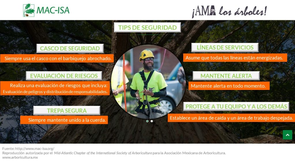 Tips de Seguridad para los trabajadores del árbol